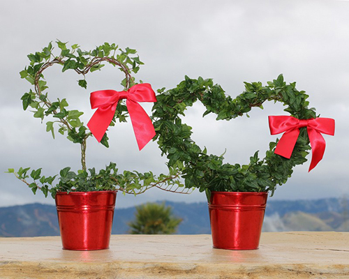 Topiary Heart Plants with a Red Bow