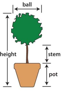 How to Measure a Live Topiary Tree?